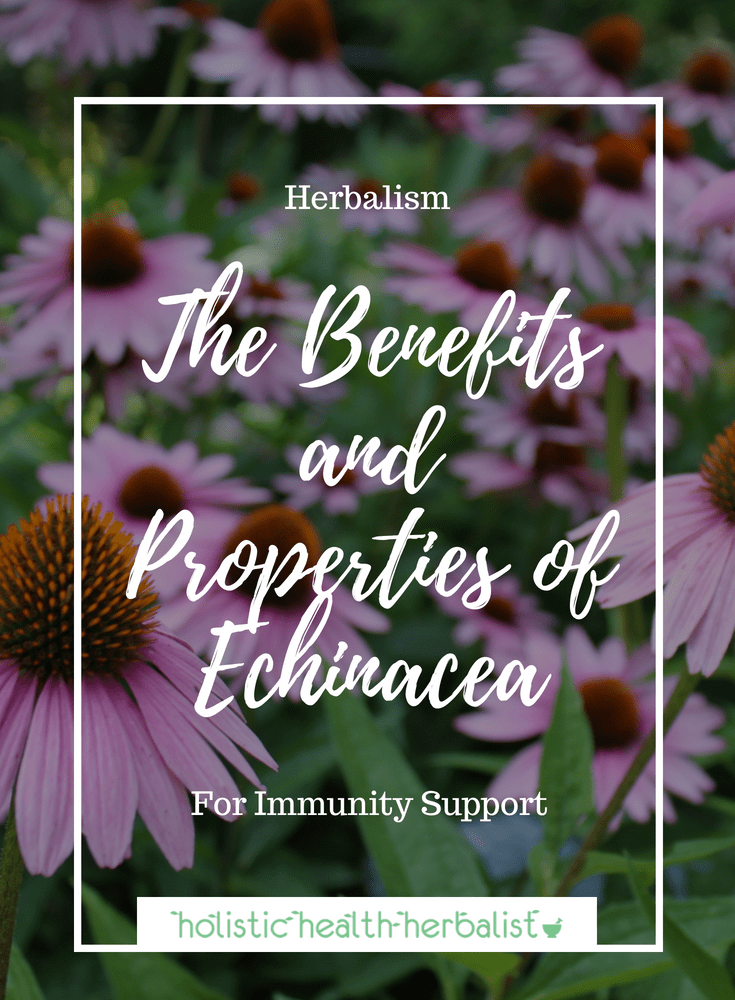 The Benefits and Properties of Echinacea - Learn how echinacea can support immunity and why you should be using this amazing herb for cold and flu support.