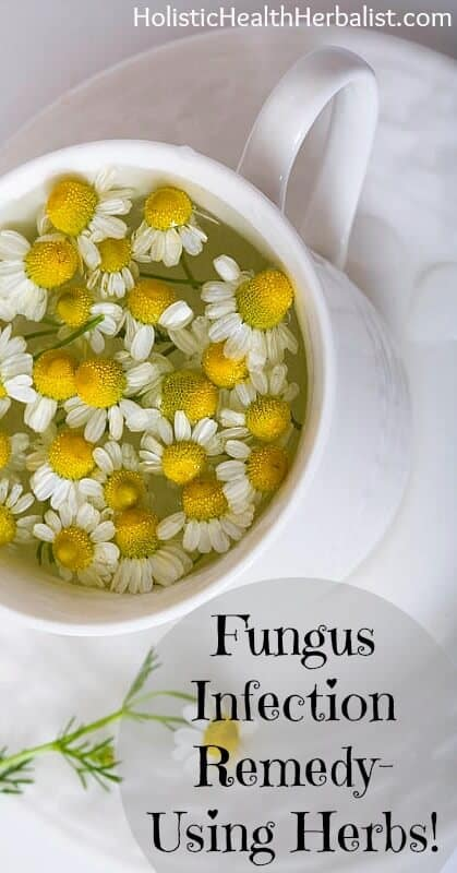 Fungus Infection Remedy Using Herbs - Learn about the best herbs that treat and cure fungal infections!