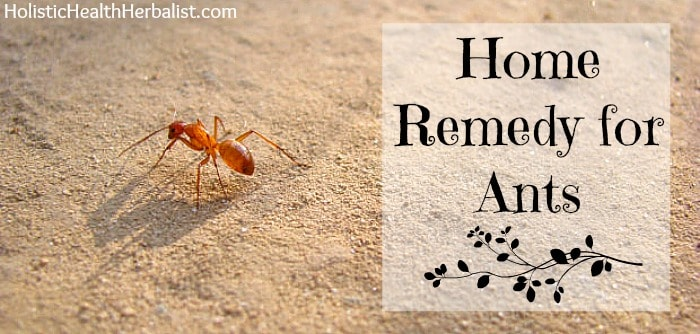 home remedy for ants that really works