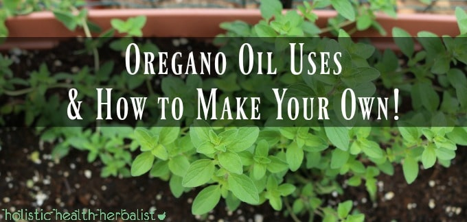 Oregano Oil Uses and Benefits How to Make Your Own!