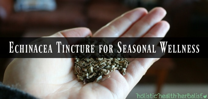Echinacea Tincture for Seasonal Wellness